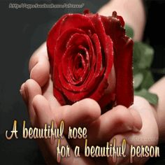 Image result for a beautiful rose for you