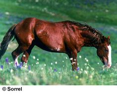 Mustangs are feral horses of mixed ancestry with all breeds common in the American West making a  contribution.  They may be any color and pattern.