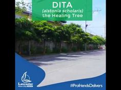Dita Tree Videos
