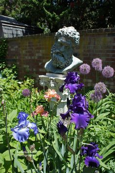 Surrounded by Iris, Allium and later by day lilies.