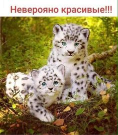 Cute Animal Pictures, Animals Of The World, Wilderness, Garden Sculpture, Cute Animals, Creatures, Cats, Outdoor Decor, Fluffy Kittens