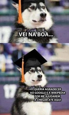 Véi, na boa – Anushka Shaikh Funny Animal Memes, Cute Funny Animals, Stupid Funny Memes, Funny Relatable Memes, Top Memes, Dankest Memes, Memes Status, Disney Memes, Life Memes