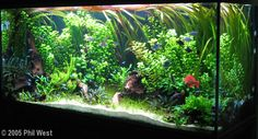 2005 AGA Aquascaping Contest - Entry #116