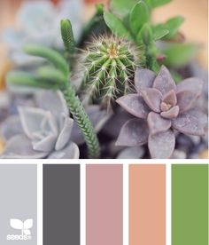 succulent color - design seeds by adriana.tomim