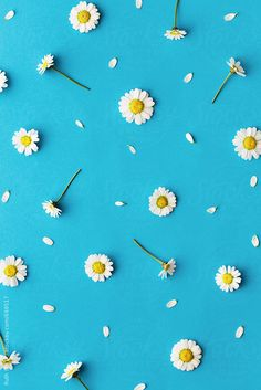 40 Ideas For Flowers Photography Wallpaper Backgrounds Daisies