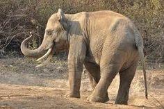 :) y un elefante