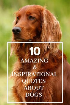10 Amazing and Inspirational Quotes About Dogs #DogQuotes #InspiringDogQuotes #FamousQuotesAboutDogs