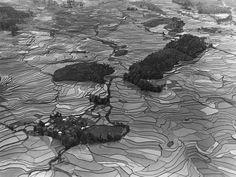 四川南部的稻田