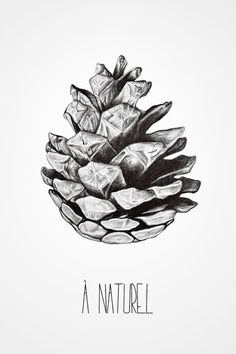 Fir cone Art Print