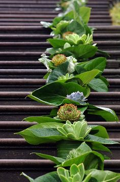 Tropical leaves are punctuated with various succulents that line the steps of this Australian wedding venue. aisle #aisle
