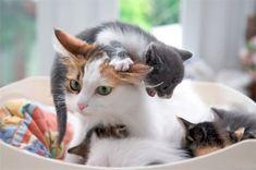 Ser mãe ou pai é a melhor coisa do mundo, mas, às vezes, nem tudo é tão simples, já que os pequenos requerem atenção e cuidados constantes. O mesmo ocorre com os animais, só que, muitas vezes, eles têm mais pequenos para cuidar que nós e, claro, também fazem o maior esforço para protegê-los. Encontramos …