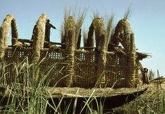 Reed house under construction, Iraq marshes 1978  by Paul Dober