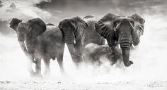 Photo Etosha by Ulf Amundsen on 500px