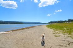 The path around Big Bear Lake is fit for dog-friendly fun! Big Bear Lake, Dog Friends, Paths, Paradise, Landscape, Dogs, Travel, Animals, Fit