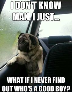 What if i never find out who's a good boy? | The Contemplative World Of The Introspective Pug