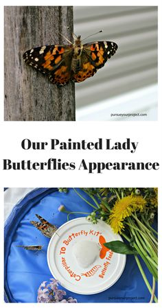 Our Painted Lady Butterflies Appearance via @pursueproject