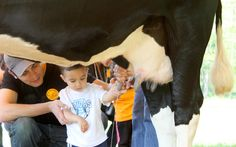 Seven nearby farms that have family-friendly activities and tours. Get ready to milk a cow, ride a tractor and more!