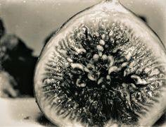 """""""Fig,"""" 1933  Kansuke Yamamoto, ©Toshio Yamamoto. 山本悍右 昭和8年10月15日撮影"""