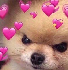 Dog Kawaii, Cute Funny Animals, Cute Dogs, Sapo Meme, Heart Meme, Cute Love Memes, Cartoon Profile Pictures, Crush Memes, Bad Girl Aesthetic
