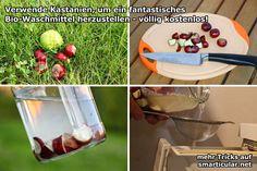 Waschmittel aus Kastanien herstellen