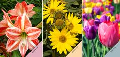 Quem quer começar a semana com o colorido natural das flores?