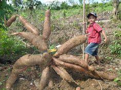 Syahroni,dari tukang semir sepatu jadi milyarder berbini bening ! | wisbenbae