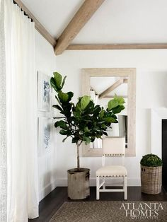 Chic living room features wood beams over a distressed beveled wall mirror lined with a cream nailhead chair and a potted fiddle leaf fig plant.