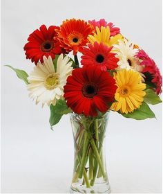 Daisies Galore-Colorful, vibrant gerbera daisies, designed in a vase with a touch of greenery, is sure to put a smile on someone's face! Get Well Flowers, Send Flowers, Norfolk Virginia, Beach Flowers, Grandparents Day Gifts, Same Day Flower Delivery, Lush Green, Virginia Beach, Green Plants