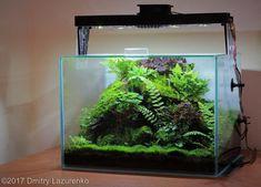 Betta Fish Tank, Aquarium Fish Tank, Planted Aquarium, Home Aquarium, Aquarium Design, Aquarium Ideas, Aquarium Ornaments, Aquarium Decorations, Aquascaping