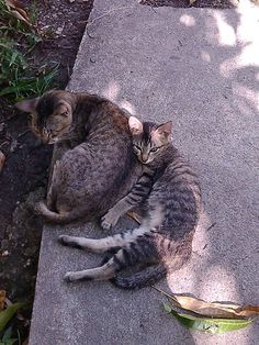 Mother and kitty...
