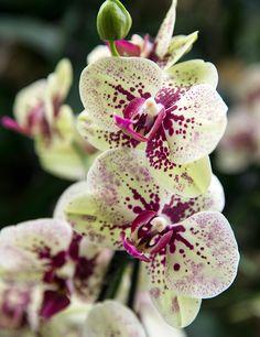 Orquídea Lo más probable es que tengas una prenda de leopardo o encaje escondida en tu armario. Países exóticos como Nueva Zelanda o Tailandia son tus destinos más atractivos. Eres sutil y misteriosa, todo el mundo ama un poco de misterio, ¿no?