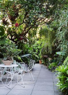 The Design Files x The Planthunter. The orange tree in the centre of the garden provides fruit, sun protection, privacy and space for growing more plants. Courtyard garden of Ian McNaugh.