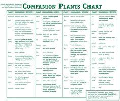 Companion Plants Chart - herbs & veggies