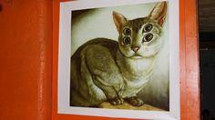 Gato de cuatro ojos