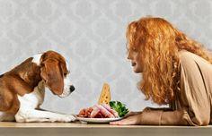 Aj pes vie, kto mu dáva jesť -- slovenské príslovie