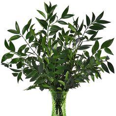 Nagi Greenery in 2018   J&A Flowers   Pinterest   Flowers ...