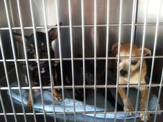 Several dogs rescued from truck soon up for adoption See Video!