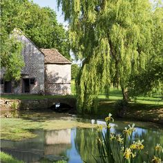 Garden pond with weeping willows