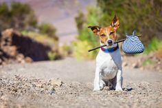 The worst thing is for your dog to get out and you not have a clue where he is.  These are some great tips for keeping your pet at home and not on the loose!