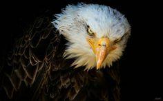 Glower, by Chris Caron. From u-n-d-e-f-i-n-i-t-e-d-n-e-s-s.tumblr.com Source: 500px.com