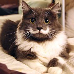 hamilton-chat-hipster