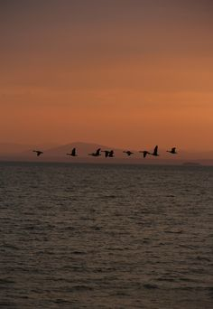 Leddy Beach Geese Vermont Lake Champlain http://www.ericfitzgeraldphotography.com