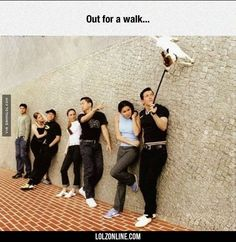 Anti-Gravity Dog#funny #lol #lolzonline