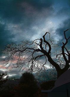 TREE by boo joo