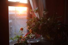 Sunrise and a gorgeous fresh table arrangement. Photograph and floral design by Saipua.