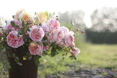 Flower Floret Farm