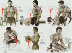 Exercises for Best Biceps Workout for Mass Biceps Workout Chart, Best Bicep Workout, Bicep Workout Women, Forearm Workout, Gym Workout Chart, Basic Workout, Workout Tips, Workout Routines, Bodybuilding Training