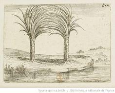 [La vie de la Mère de Dieu représentée par des emblèmes]. [8], [Les deux palmiers] : [estampe] / [Jacques Callot] - 1