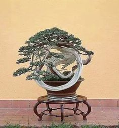Bonsai Bark | Promoting and Expanding the Bonsai Universe | Page 10