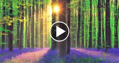 Fit Life Videos - Relaxing Music for Stress Relief. Calm Celtic Music for Meditation, Healing Therapy, Sleep, Yoga Relaxing Gif, Relaxing Music, Yoga Music, Best Meditation Music, Deep Sleep Music, Sleep Yoga, Stress Relief Music, Calming Music, Celtic Music